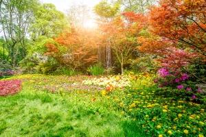 smallgreenspringparkflowers